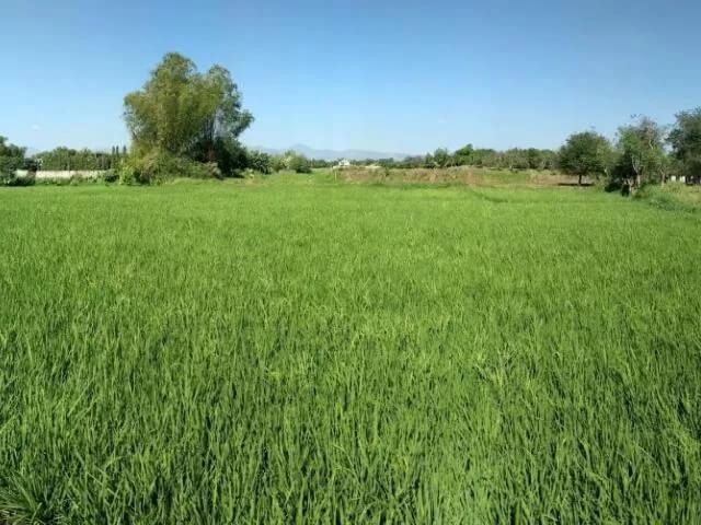 Farm Land in Sinura Porac