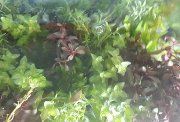 Aquarium Assorted Plants